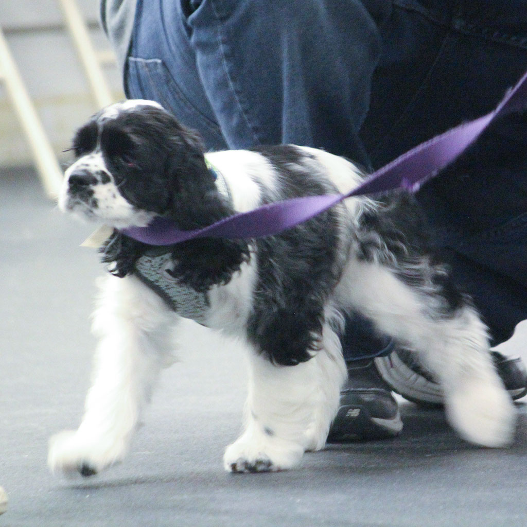 K9 Manners & More Puppy Class