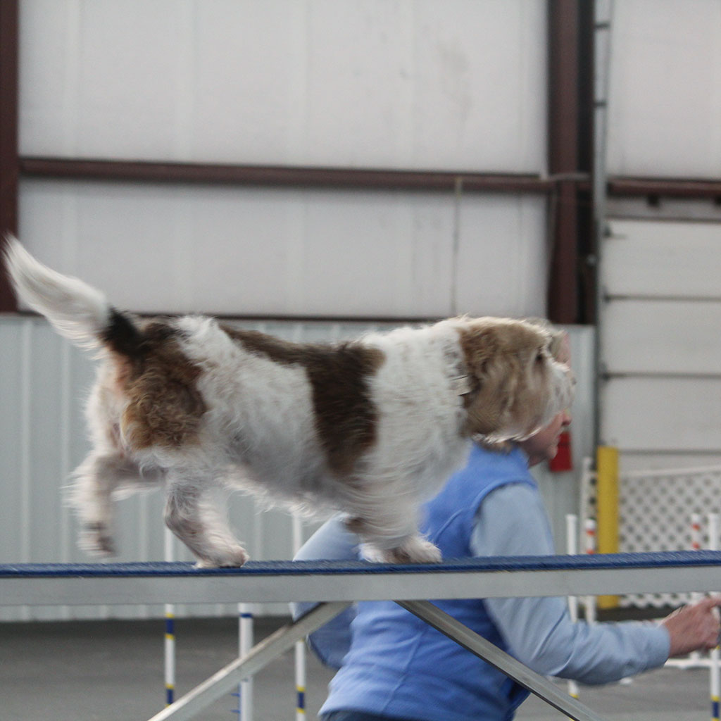 K9 Manners and More Agility